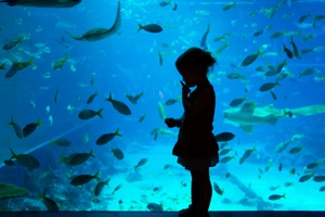 S.E.A. Aquarium™ Admission E-Ticket