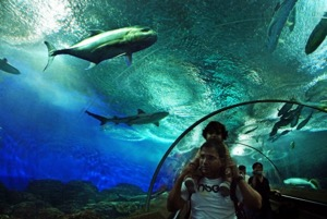 * S.E.A. Aquarium™ [E-Ticket Only] *