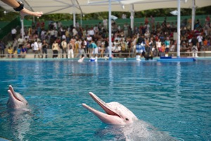 Underwater World & Dolphin Lagoon Admission E-Ticket