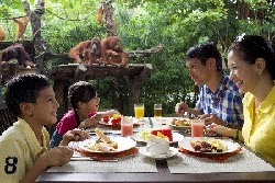 Morning Zoo  With Breakfast Tour